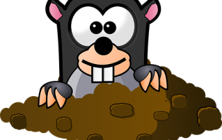 Cartoon mole
