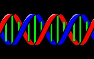 Cartoon DNA